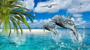 dolphins summer sea gulls palm desktop wallpaper hd for mobile