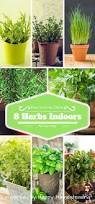 Herbs Indoors by 19 Best Gardening Fall Images On Pinterest Fall Planting Fall