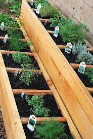 Herb Container Garden - beautiful container herb gardens
