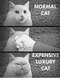 Cat Facts Meme - expensive luxury cat