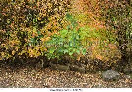 ornamental hedge stock photos ornamental hedge stock images alamy