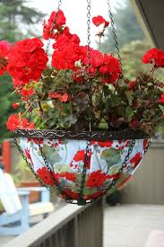 geranien balkon die besten 25 geranien pflanzen ideen auf geranien