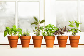 window herb gardens grow flavor windowsill herb garden kit fasci garden