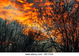 Lit Branches Dusk Twilight Back Lit Branches And Leaves With A Beautiful Pink