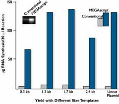 megascript t7 transcription kit thermo fisher scientific