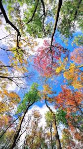 cool phone wallpapers with colorful trees in autumn season