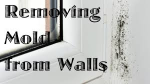 How To Clean Walls by Removing Mold From Walls Youtube