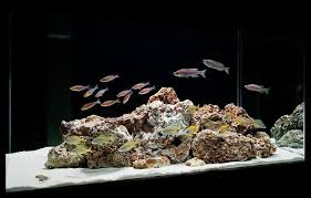 Reef Aquascape Designs Aquascaping Styles Design Ideas And Mistakes To Avoid