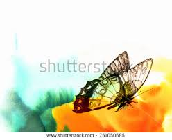 butterfly landed stock images royalty free images u0026 vectors