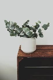 Plant Vase Plant Pot Free Pictures On Pixabay