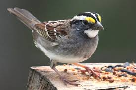 how to keep birds away from patio discouraging and controlling house sparrows