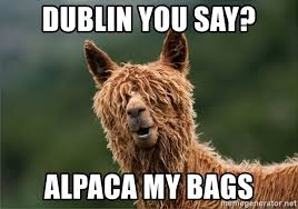 Alpaca Meme - alpaca my bags meme my best of the funny meme