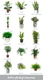 plants low light office plants low light cursosfpo info