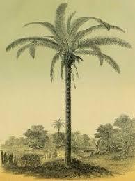 best 25 palm tree illustration ideas on las palmeras