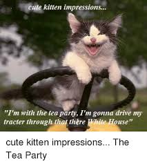 Funny Kitten Memes - cute kitten impressions i m with the tea party i m gonna drive my