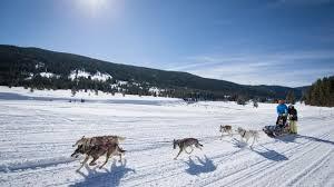 jackson hole sled dogs meet the dogs