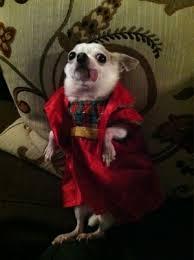 affenpinscher calgary miniature long haired dachshund breeders ontario u2013 dog