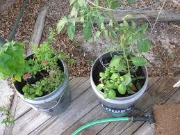 home vegetable garden for beginners vegetable garden for