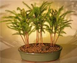indoor trees low light best house plants indoor tropical and low light
