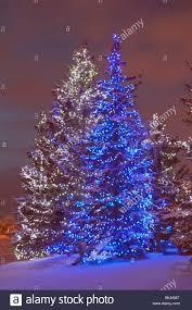 christmas light installation calgary christmas tree snow lights outdoors stock photos u0026 christmas tree