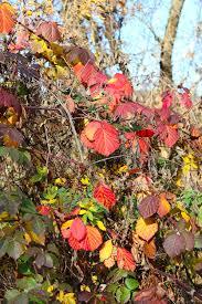 imágenes asombrosas naturaleza cosas asombrosas alrededor de nosotros en naturaleza colores del