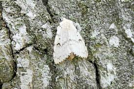 wet connecticut weather fungus may stop gypsy moth infestation