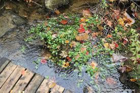 native plant sale muskoka conservancy muskoka janet davis explores colour