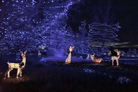 Denver Zoo Of Lights by This Grand Junction Christmas Display Listed As One Of Best In