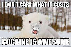 Bear Cocaine Meme - i don t care what it costs cocaine is awesome polar bear junkie