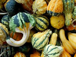 ten great ideas for decorating with gourds here by design