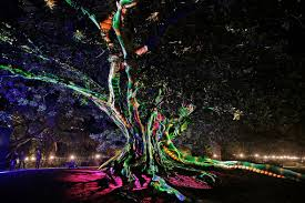 Botanical Gardens Christmas Lights by Vivid Sydney Preview Of World U0027s Largest Psychedelic Light Show