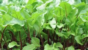 vegetable garden tuneup make room for more a way to garden