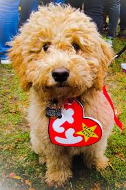 53 funny dog halloween costumes cute ideas for pet costumes