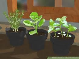 4 ways to grow an indoor herb garden wikihow