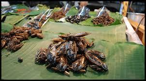 www edible top 50 edible insects list edible bug farm