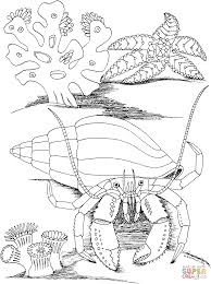 hermit crab and star fish coloring page free printable coloring