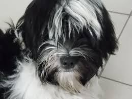 Benson Dog Meme - solo dog care february 2016