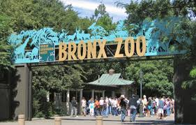 Bronx Zoo Holiday Lights by Have Breakfast With Penguins And Panda Bears At One Of Nyc U0027s Zoos