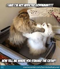 Rehab Meme - do something now send your cat to rehab by borntobefeatured