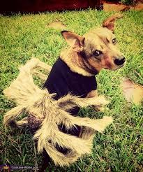 Dog Spider Halloween Costume Spider Costume Dogs
