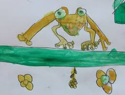 tropical tree frogs observational drawing may 2013 hannah u0027s