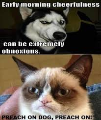 Grumpy Cat Coma Meme - nice grumpy cat coma meme grumpycat meme grumpy cat stuff ts