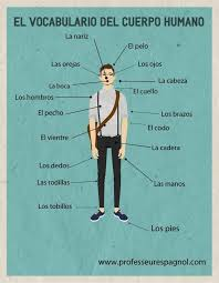 52 best parts of the body el cuerpo images on pinterest body