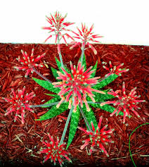 aloe vera plant with flowers pictures pinterest plants and