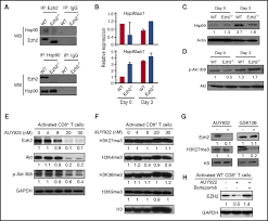 hsp90 inhibition destabilizes ezh2 protein in alloreactive t cells