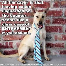 Dog Lawyer Meme - entrapment meme lawyer dog meme best of the funny meme