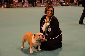 boxer dog crufts 2014 pedigree dogs exposed the blog bulldogs crufts 2013 part 1