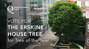 vote for the erskine house tree for tree of the year