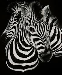 zebra wallpaper for walls descargas mundiales com zebra wallpaper qygjxz