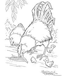 realistic hen and rooster farm animal s7cc5 coloring pages printable